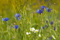 Meadow. A beautiful meadow in the countryside Royalty Free Stock Photo