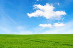 Meadow and beautiful sky. Green field under amazing sky Stock Photo
