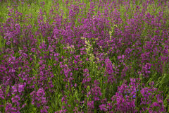 Meadow with beautiful wild flowers in the summertime Stock Photography