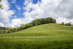 Meadow with bee box near le Vernet at col Mariaud. France Stock Image