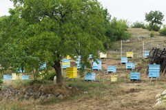 Meadow with bee hives Royalty Free Stock Image