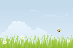 Meadow Bee Royalty Free Stock Photos