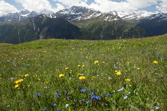 Meadow below the mountain Stock Images