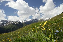 Meadow below the mountain Royalty Free Stock Photos
