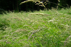 Meadow with big grasses Stock Photo