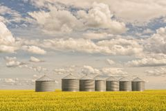 Meadow of Blooming Canola with Grain Silos Stock Images