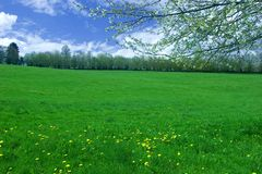 Meadow and blossom. A meadow under a partly clouded sky, with a blossoming branch in front Royalty Free Stock Image