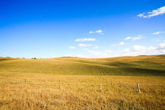 Meadow with blue sky Stock Images