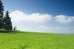 Meadow with blue sky. Stock Photo