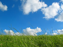 Meadow with blue sky. Meadow and blue sky with clouds Stock Photos