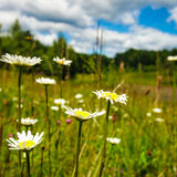 Meadow and blue sky stock photos