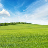 Meadow and blue sky Royalty Free Stock Images