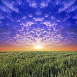 Meadow with blue sky. And sunset clouds Royalty Free Stock Photo
