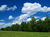 Meadow and blue sky. Green meadow and blue cloudy sky Royalty Free Stock Image