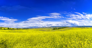 Meadow with blue sky above Stock Photos