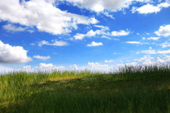 Meadow on blue sky and cloud background. The meadow on blue sky and cloud background stock photo