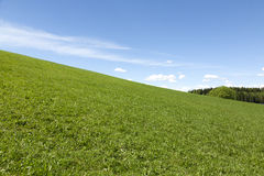 Meadow and blue sky landscape. Green meadow landscape on a sunny day Stock Photos