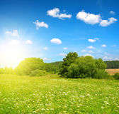Meadow with blue sky in sunny day. Summer landscape Royalty Free Stock Photo