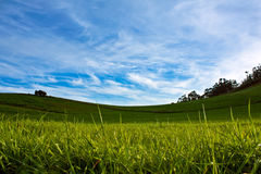 Meadow with blue sky and white clouds Stock Image