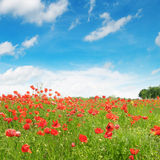 Meadow  and blue sky Stock Images