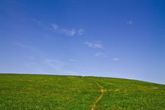 Meadow and blue sky Royalty Free Stock Photo