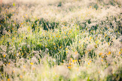 Meadow with bright sunlight Stock Photos