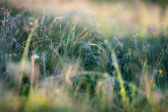 Meadow with bright sunlight Royalty Free Stock Image