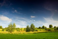 Meadow with bush under blue sky Royalty Free Stock Images