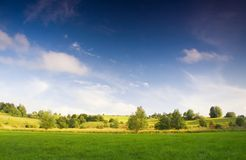 Meadow with bush under blue sky Royalty Free Stock Photos