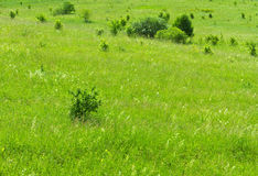 Meadow bushes background Royalty Free Stock Photo
