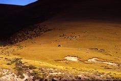 meadow bydła Zdjęcie Stock