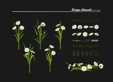 Meadow camomiles, green grass. Set of elements for design - meadow camomiles, green grass. A vector Stock Illustration