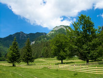 Meadow in Carpathian mountain Stock Photography