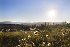 Meadow in the Carpathian Mountains Royalty Free Stock Images