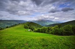 Meadow in the Carpathians Royalty Free Stock Images