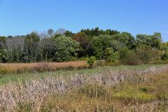Meadow with cattails grasses and trees royalty free stock photography
