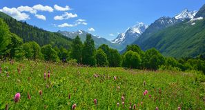 Meadow in Caucasus Royalty Free Stock Photos