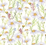 Meadow chamomiles flowers. Hand-drawn seamless watercolor pattern with meadow chamomiles flowers. Tender floral repeated print for wallpapers, textile etc Stock Illustration