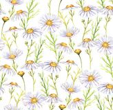 Meadow chamomiles flowers. Hand-drawn seamless watercolor pattern with meadow chamomiles flowers. Tender floral repeated print for wallpapers, textile etc Vector Illustration