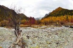 Meadow Chonggu Royalty Free Stock Photography