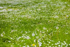 Meadow in the city park royalty free stock photo