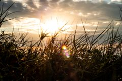 Meadow close-up on the sunlight background. royalty free stock image