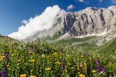 Free Meadow Closeup With Blooming Wildflowers At The Rocky Mountains Background Stock Photo - 175415950