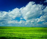 Meadow with cloudy sky Royalty Free Stock Image