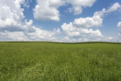 Meadow with cloudy sky in summer Royalty Free Stock Image