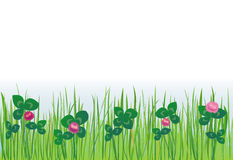 Grass Lawn with Clover Stock Photos