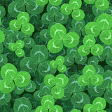 Meadow clovers green leaves seamless pattern Royalty Free Stock Images