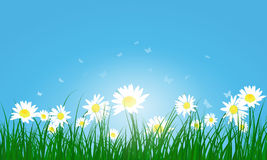 Meadow color background Royalty Free Stock Image