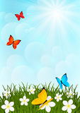 Meadow with color butterflies Royalty Free Stock Image