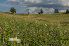 Meadow with color flowers in national park Royalty Free Stock Image